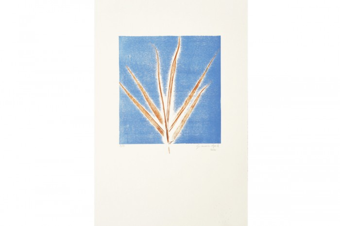 Stampa Incisione Fronde Blue Series